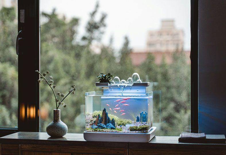 Trang trí phòng đơn giản với bể cá cảnh mini